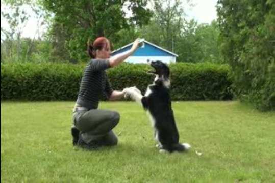je dresse mon chien guide complet comment dresser son chien en 7 semaines. Black Bedroom Furniture Sets. Home Design Ideas